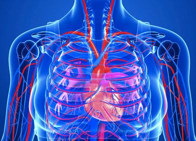 img-coeur-humain